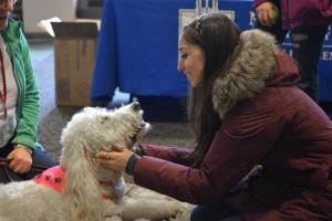 EDITORIAL: Forget puppies, pre-finals study day would alleviate stress