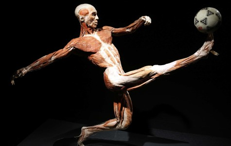 We are all human: 'Body Worlds' comes to Milwaukee