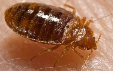 Bedbugs in one room of Straz Tower confirmed after pest control inspection