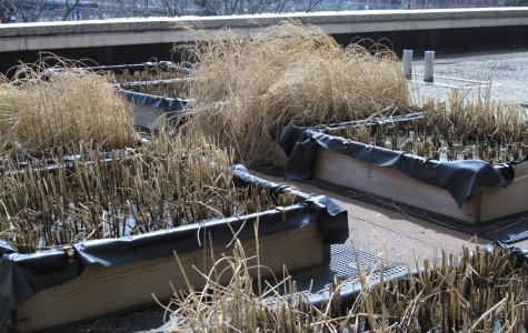 Marquette professor grows garden on roof of Wehr Life Sciences