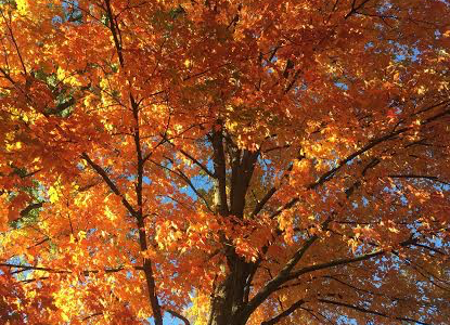 MURPHY: Six lesser-appreciated reasons why fall is the best season