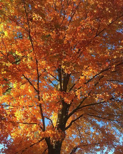 MURPHY: Six lesser-appreciated reasons why fall is the best season