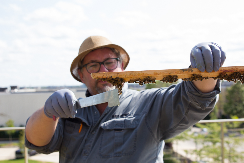 Charlie Koenen displaying bees on the roof of Engineering Hall.