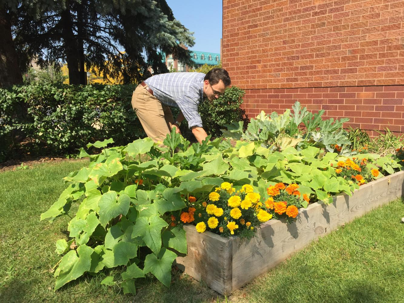 Aidan Flanagan, a senior in the College of Health Sciences, tends to the community garden outside of Weasler Auditorium.