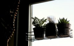 Savvy students spruce up dorms with succulents