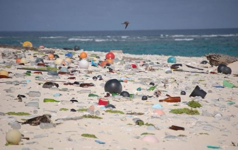 KORENICH: Spring break has negative effect on environment