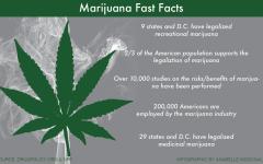 HARRINGTON: Legalize it – Case for marijuana decriminalization