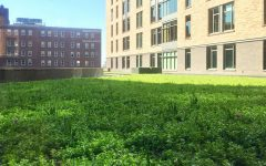 Wild Commons green roof part of Campus Sustainability initiative