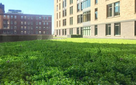 The new green space on the roof of Wild Commons.  Photo courtesy of Brent Ribble