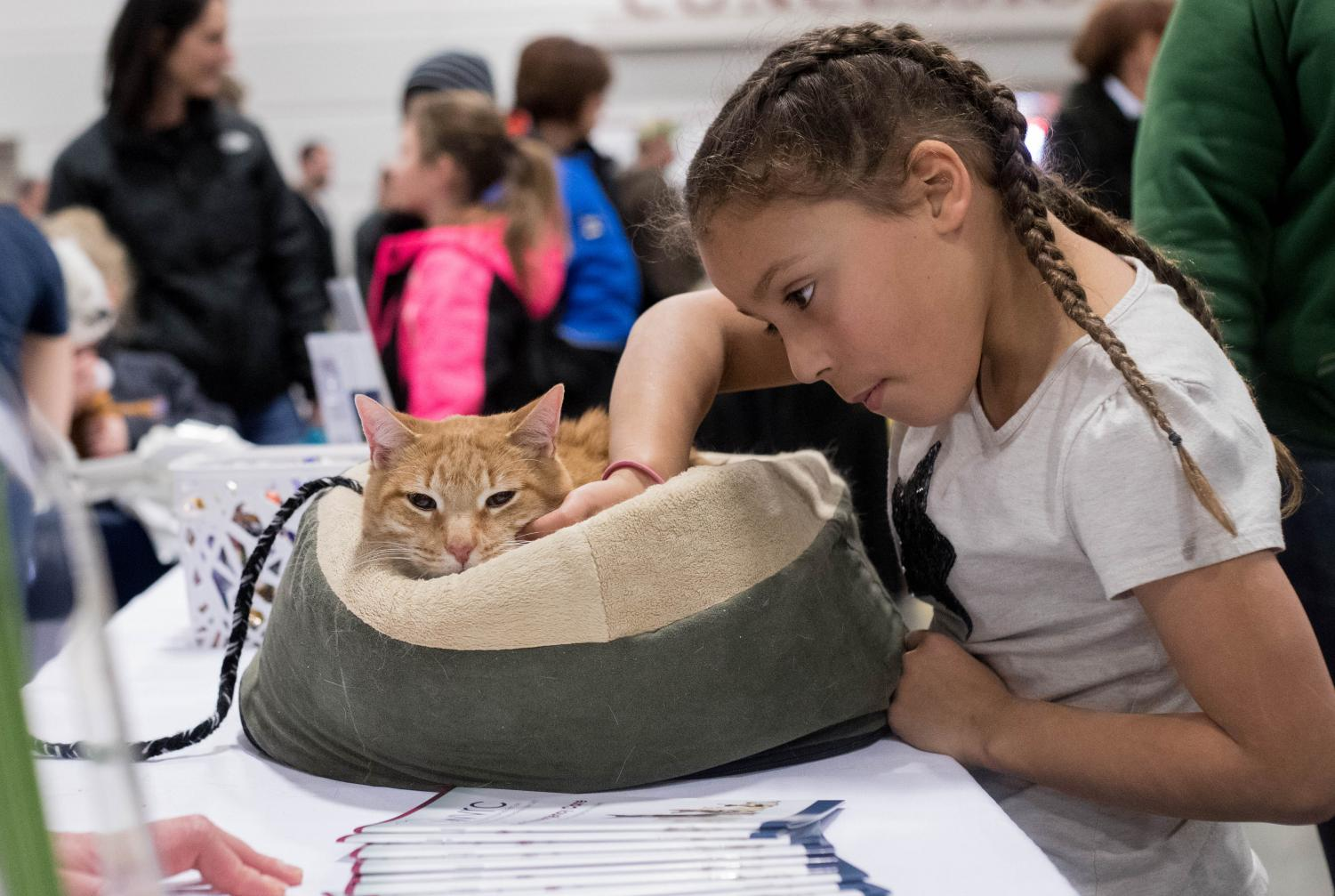 In 2018, an estimated 14,000 people visited the expo. This year they hope to attract even more pet lovers. Photo courtesy of Beth Enneking