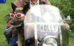Motorcycle dog brings joy to Milwaukee community