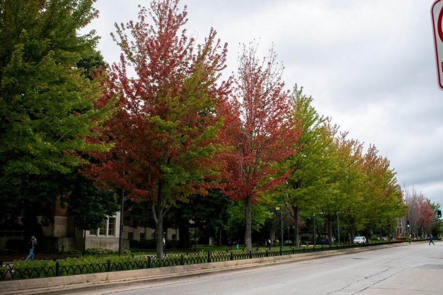 The leaves are beginning to change color as the temperature starts to drop.