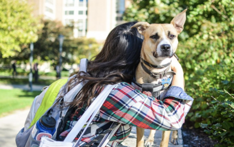 Nattie provides comfort to those on campus. Marquette Wire stock photo