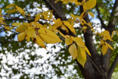 Some leaves on campus are already changing color.